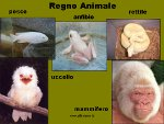 Regno animale